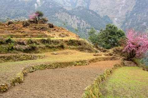 Entre Singla et Khorla -  Manaslu - Tirawa -