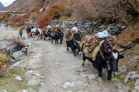 Portage Népal -