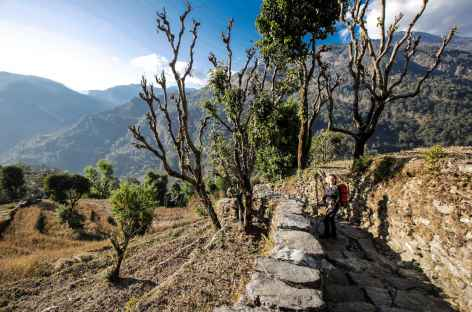 Chemins empierrés au milieu des cultures en terrasses -