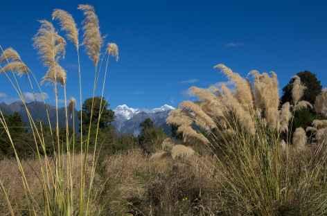 Le Mont Cook (3754 m) depuis le village de Fox Glacier - Nouvelle Zélande -