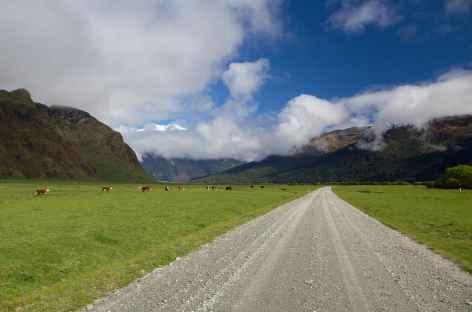Piste pour rejoindre la vallée de Rob Roy, massif d'Aspiring - Nouvelle Zélande -
