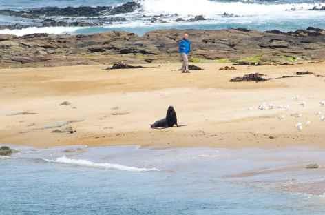 Lion de mer sur la côte des Catlins - Nouvelle Zélande -