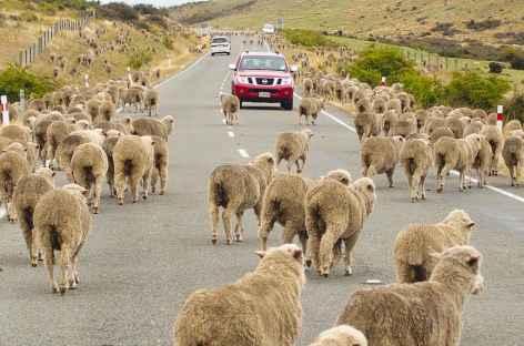 Sur la route... - Nouvelle Zélande -