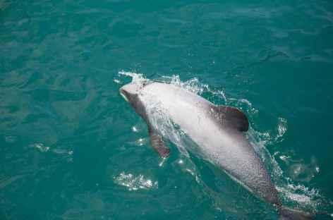 Croisière depuis Akaroa et observation des dauphins Hector - Nouvelle Zélande -
