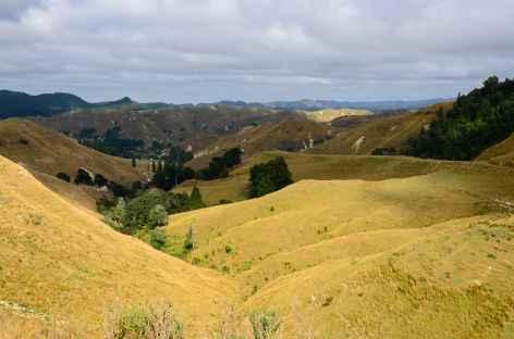 Sur la route dans les montagnes de Wanganui - Nouvelle Zélande -