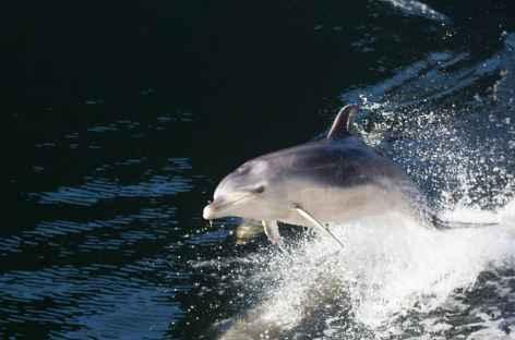 Dauphin dans le fjord Doubtful Sound - Nouvelle Zélande -