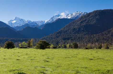 Dans les environs de Franz Josef, au loin le Mt Cook (3754 m) - Nouvelle Zélande -