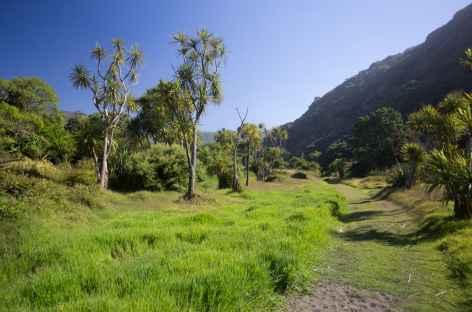 Végétation typique, Zion Hill Track - Nouvelle Zélande -