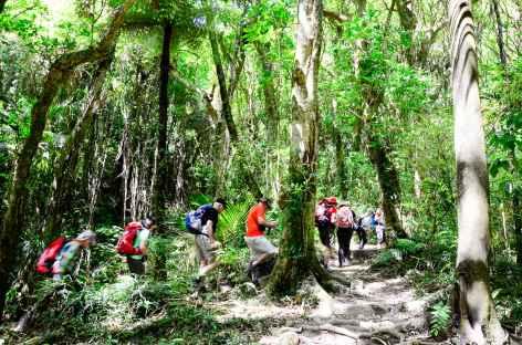 Randonnée dans la réserve de Hemi Matenga - Nouvelle Zélande -