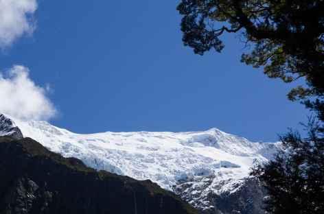 Rob Roy Glacier, massif de l'Aspiring - Nouvelle Zélande -