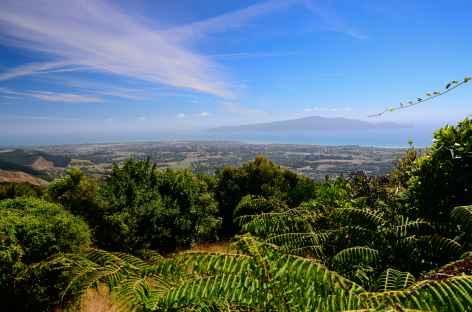 Randonnée sur les hauteurs de Waikanae, au loin Kapiti - Nouvelle Zélande -