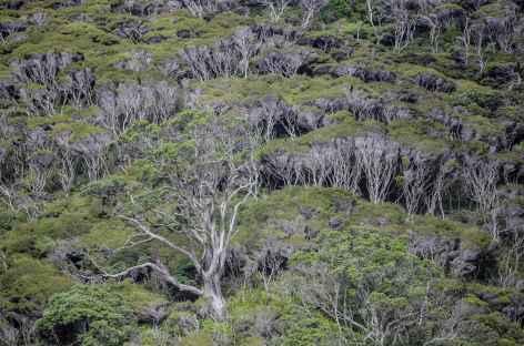 Végétation dense de Great Barrier Island - Nouvelle Zélande -