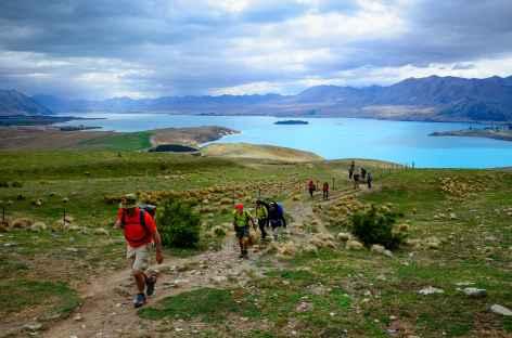 Marche vers le Mont John, sur les hauteurs de Tekapo - Nouvelle Zélande -
