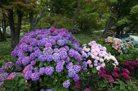 Jardin botanique de Christchurch - Nouvelle Zélande -