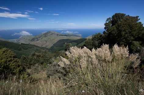 Rando sur les hauteurs d'Akaroa, péninsule de Banks - Nouvelle Zélande -