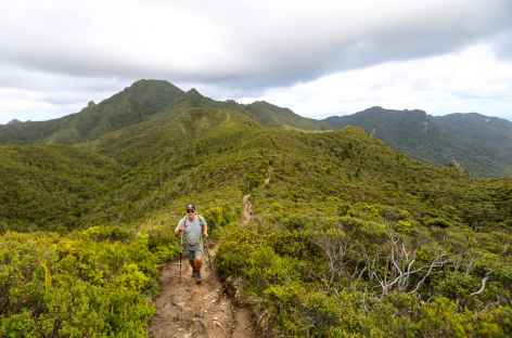 Descente du Mt Hobson, point culminant de Great Barrier Island - Nouvelle Zélande -