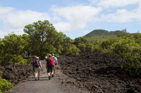 Sentier d'accès au volcan Rangitoto - Nouvelle Zélande -