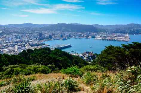 Wellington depuis le sommet du Mt Victoria - Nouvelle Zélande -