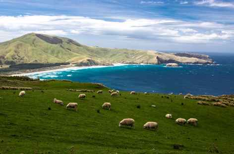 La côte de la péninsule d'Otage, depuis The Chasm - Nouvelle Zélande -