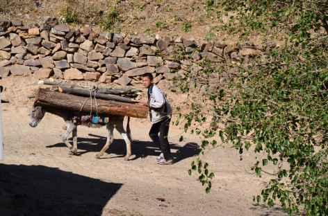 Jeune muletier - Ouzbékistan -