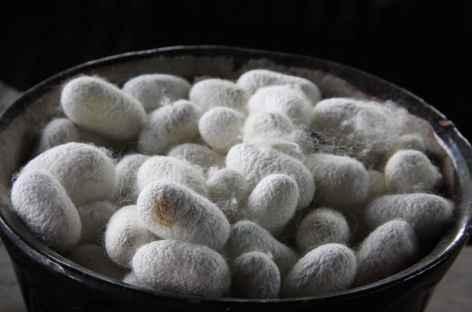 Cocons de soie - Fergana - Ouzbékistan -