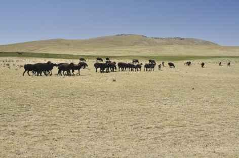 Sur le plateau de Fozilom - Ouzbékistan -