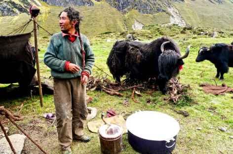 Nomades et Yaks, Tibet -