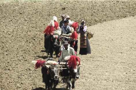 Travaux des champs, Tibet -