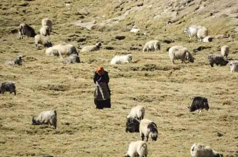 Bergère nomade, Tibet -