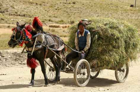 Récolte Tibet -
