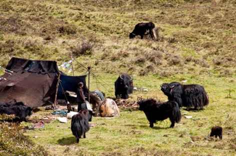 Nomades du Tibet -