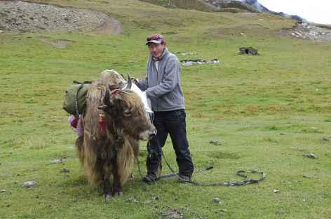 Chargement des yaks - Tibet -