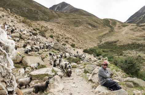 Animation sur le sentier - Tibet -