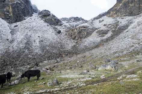 Sur le retour - Tibet -