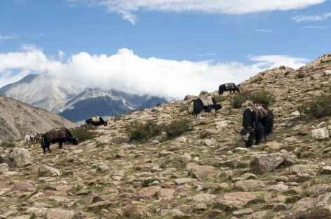 Pause de la mi-journée - Tibet -
