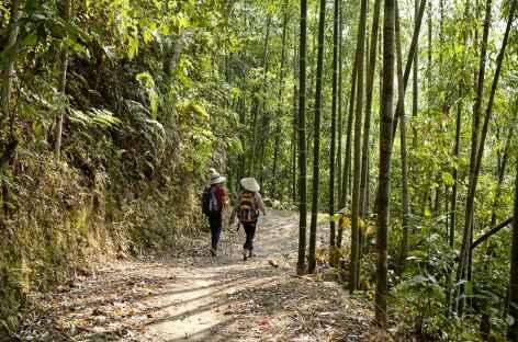 Le paysage alterne entre forêts de bambous et rizières. -