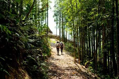 Forêt de banbous région Pan Hou Vietnam -
