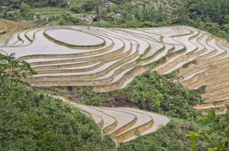 - Vietnam -