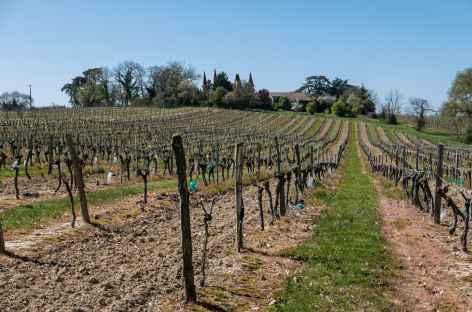 Vignoble des Côtes de Gascogne avant Eauze -