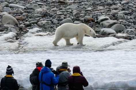 Observation de l'ours polaire - Spitzberg -
