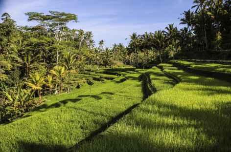 Rizières vers Gunung Kawi - Bali -