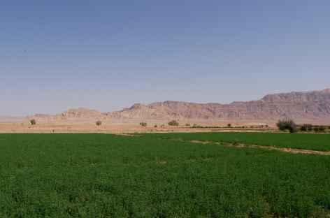 Désert Dasht- Kavir (oasis) - Iran -