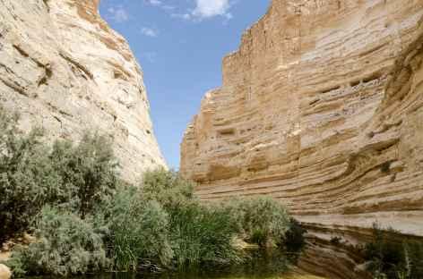 Marche dans le Wadi Tsin, désert du Néguev - Israël -
