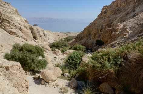 Réserve naturelle d'Ein Gedi - Israël -