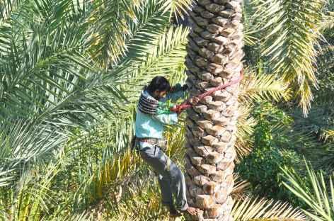 Dans la palmeraie - Oman -