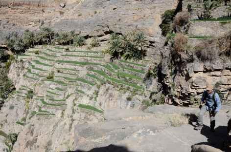 Palmeraie de Masirat Al Jawamid, djebel Akhdar - Oman -