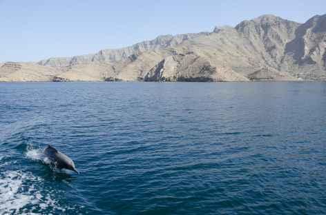 Dauphin dans les fjords du Musandam - Oman -