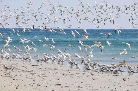 Nombreux oiseaux vers Khor Rori, Dhofar - Oman -