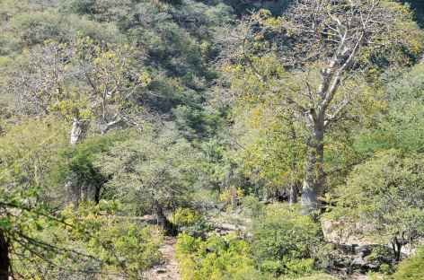 Luxuriant Wadi Darbat - Oman -