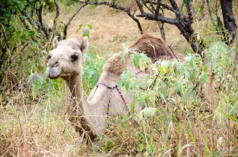 Dans le Wadi Darbat - Oman -